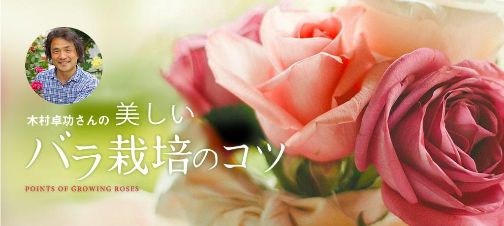 木村卓功さんの「美しいバラ栽培のコツ」