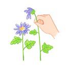 花がらつみ