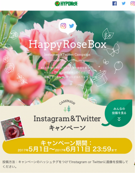 Happy rose box