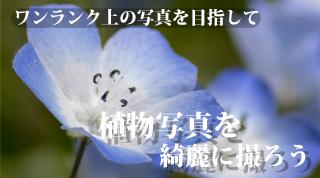 植物写真を綺麗に撮ろう!