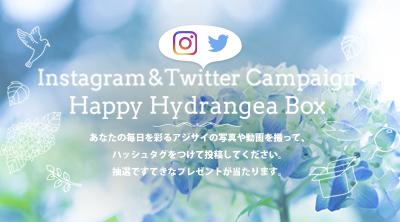 Happy Hydrangea Box