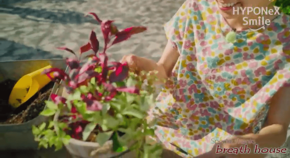 カラーリーフの寄せ植え
