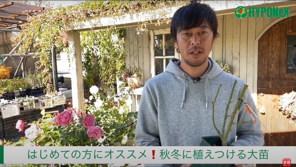 バラの育て方 バラ大苗の地植え