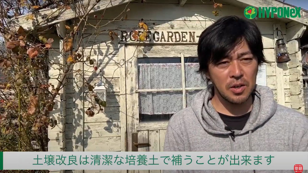 【バラ栽培の基本 003】 バラの育て方 大苗の地植え