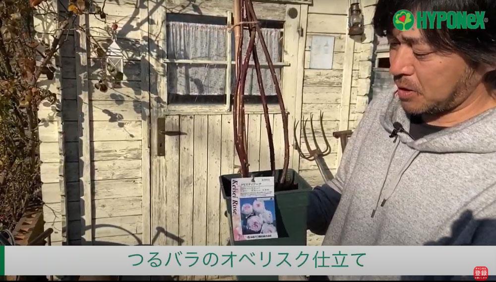 【バラ栽培の基本 004】バラの育て方 鉢で育てるオベリスク仕立て