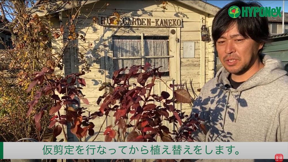 【バラ栽培の基本 005】 バラの育て方 秋冬(休眠期)の植え替え
