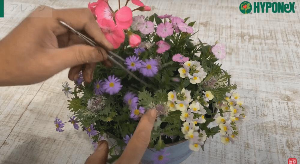 春まで楽しめるゼラニュウムの寄せ植え