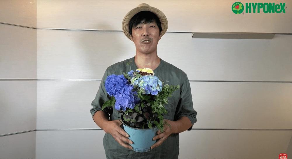 紫陽花(アジサイ)を使った夏らしい寄せ植え