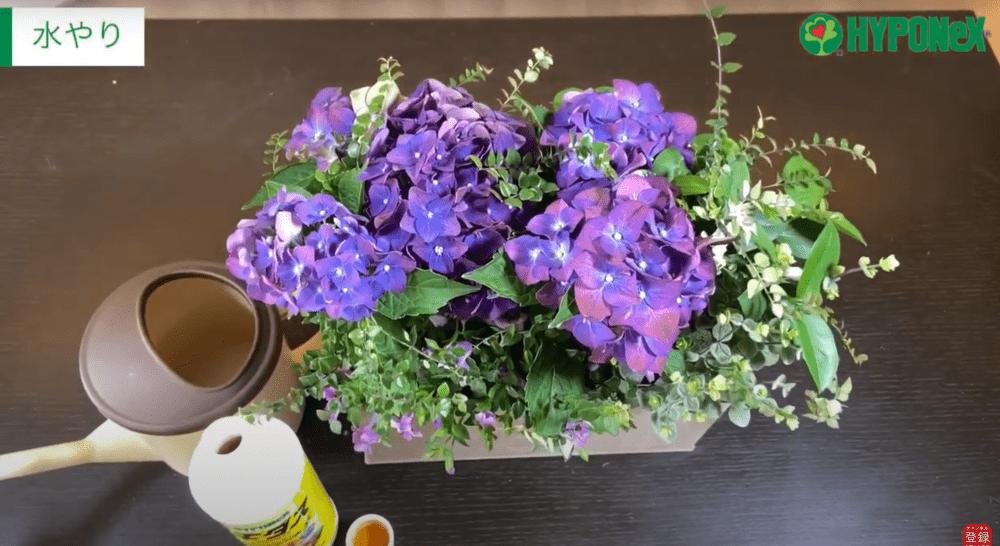 紫の紫陽花を使ってシックでお洒落な寄せ植え