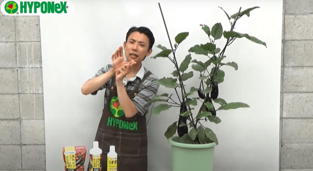 【大きなナスを育てるコツ3】花が落ちる原因を解説!