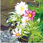 いろいろな植物