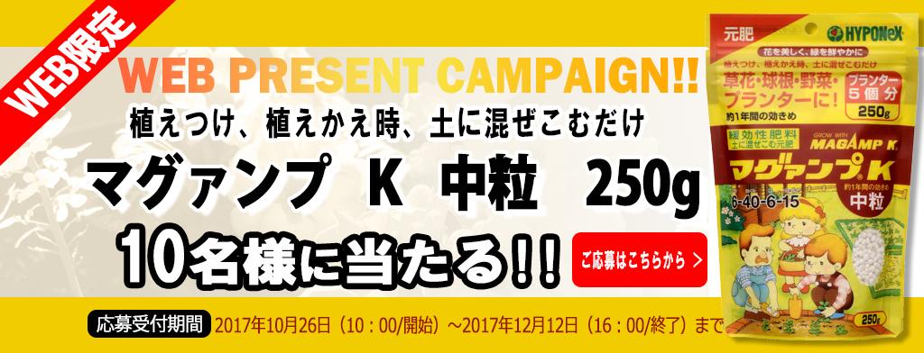 web限定プレゼントキャンペーン