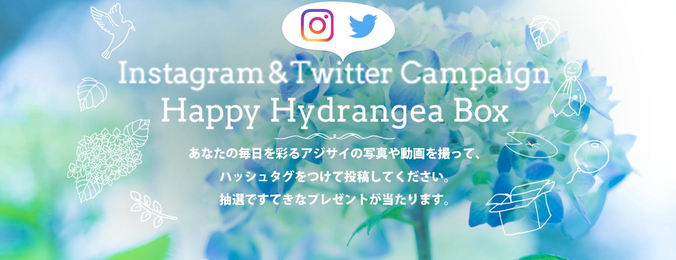 Happy Hydrangea Box写真投稿キャンペーン