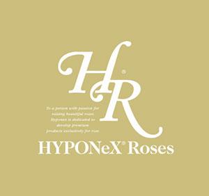 HR Hyponex Roses