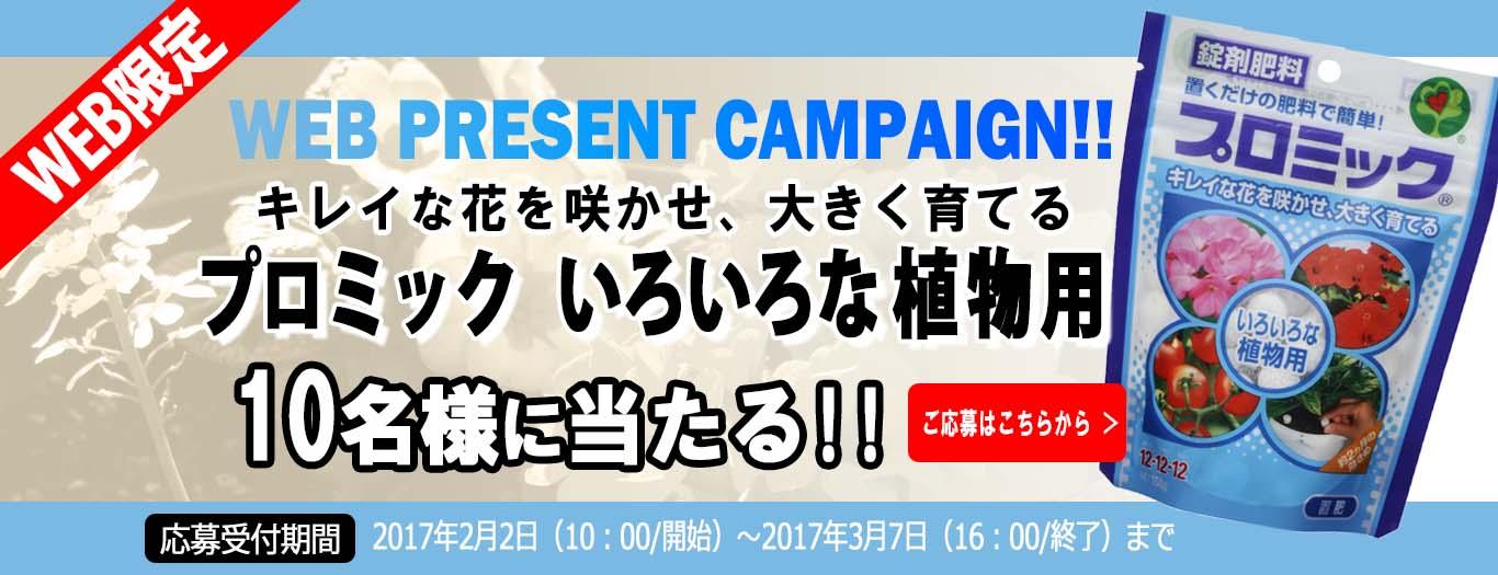 Webプレゼントキャンペーン