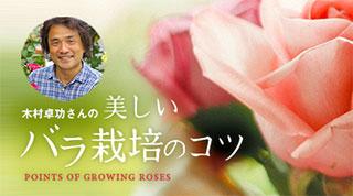 ローズクリエイター木村卓功さんに聞きました。生育シーズン別要注意ポイント!