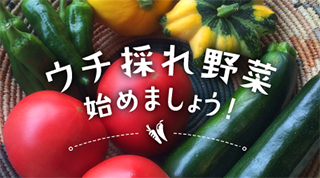 ウチ採れ野菜