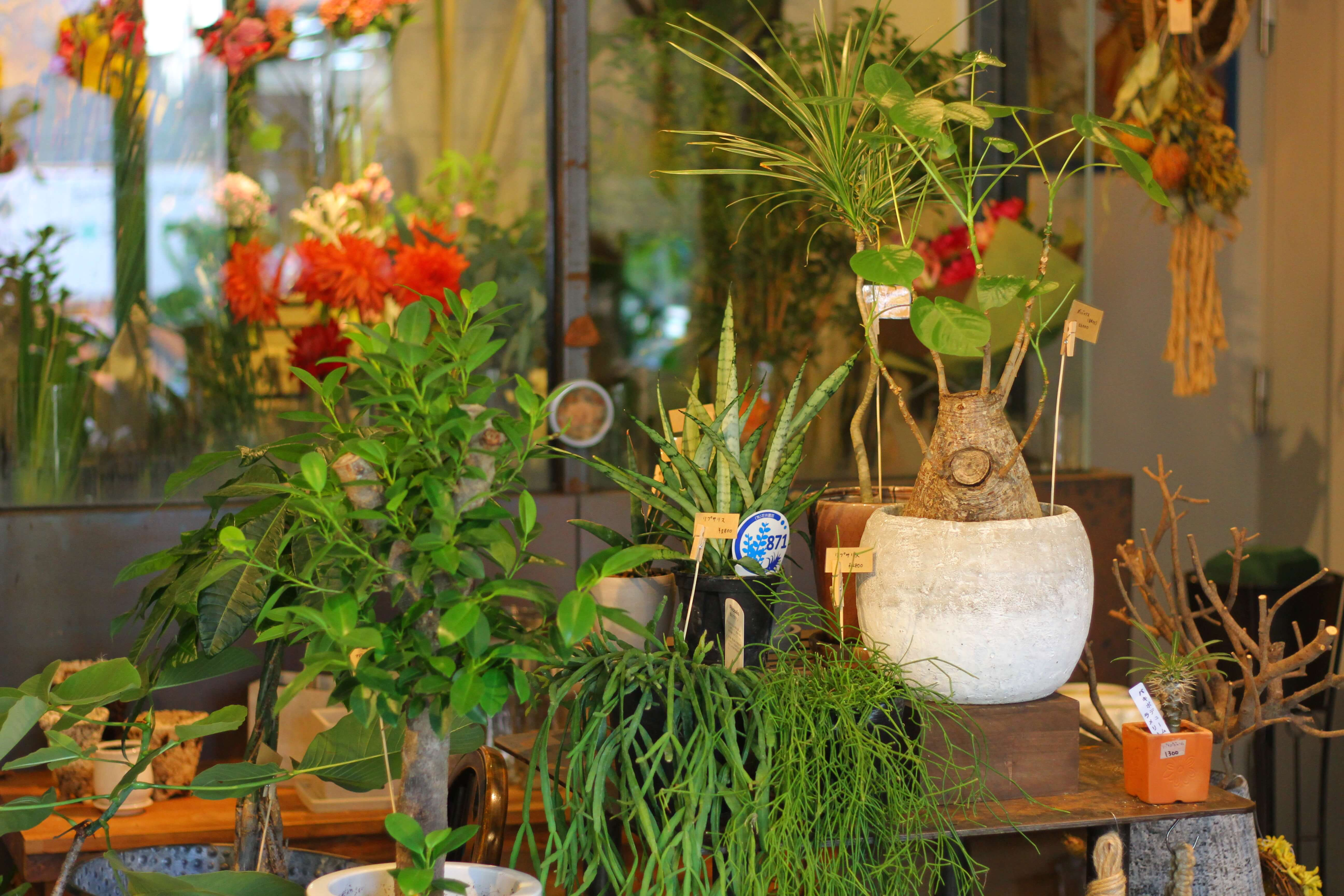 plants_in_shop