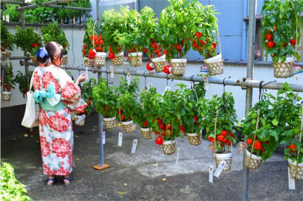 東京植物歩き