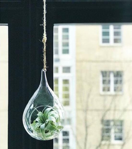 透明な花瓶に入ったティランジア