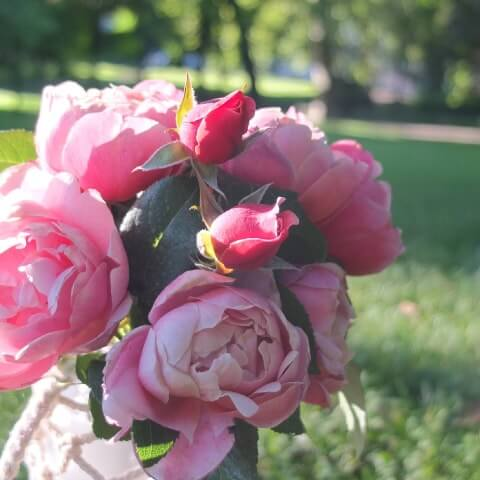 pink3-min