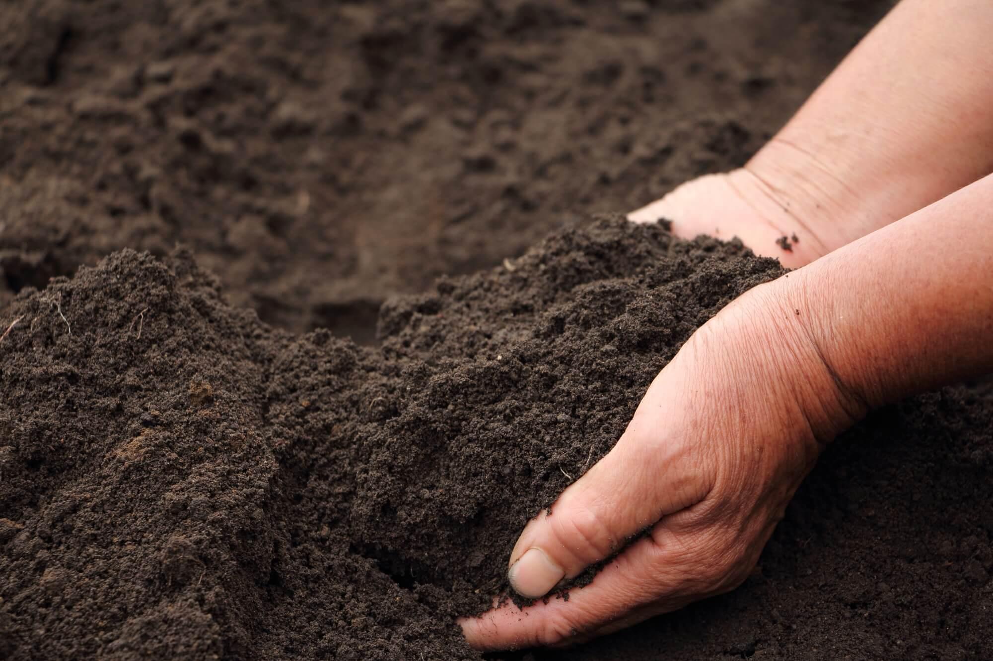 培養土について解説!作り方と使い方、腐葉土との違いをチェックしてお ...