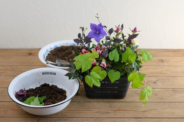 plantia1006-no17
