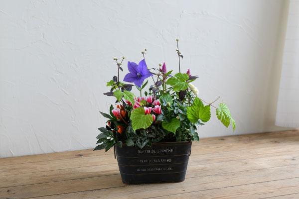 plantia1006-no21