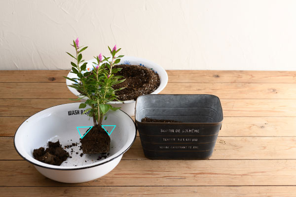 plantia1006-no3