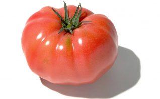 桃太郎 トマト
